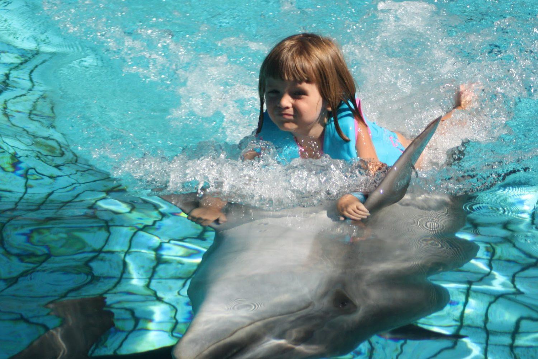 Pływanie z delfinami Sharm El Shiekh